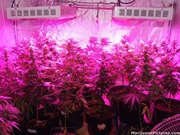 Full Spectrum 300W LED Plant Grow Light For Hydroponics London