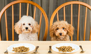 Discover The Deadly  Secret The Dog Food Industry